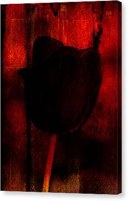 and Venus Rose Red Out of Wine Canvas Print by Rebecca Sherman