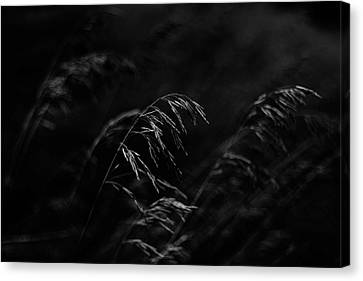 And Yet More Darkness Canvas Print