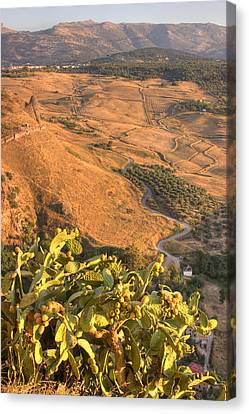 Canvas Print featuring the photograph Andalucian Golden Valley by Ian Middleton
