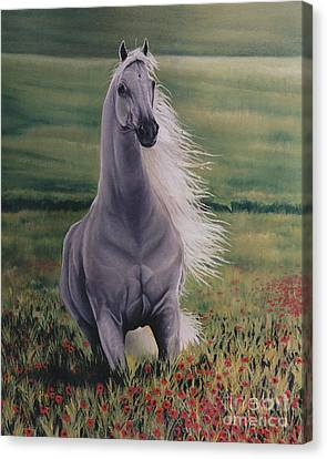 Andalusian Spirit Canvas Print by Louise Green