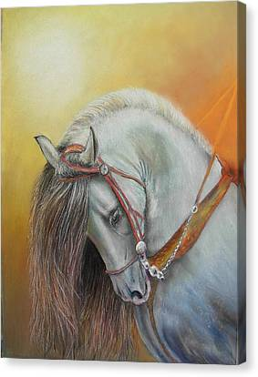 Canvas Print featuring the painting Andaluz by Ceci Watson