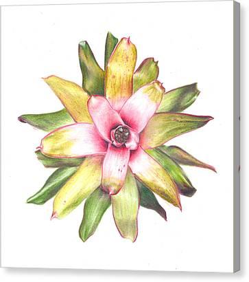 Neoregelia Canvas Print - Andrea's Choice by Penrith Goff