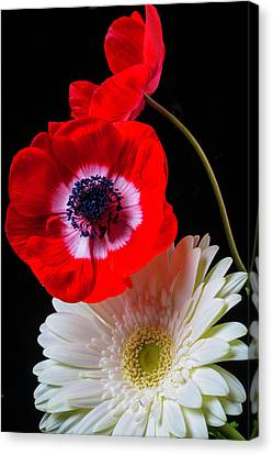 Anemone And Gerbera Daisy Canvas Print by Garry Gay
