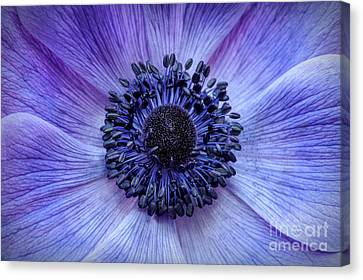 Anther Canvas Print - Anemone Blue by Tim Gainey