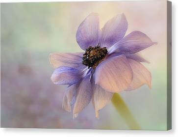 Anemone Flower Canvas Print