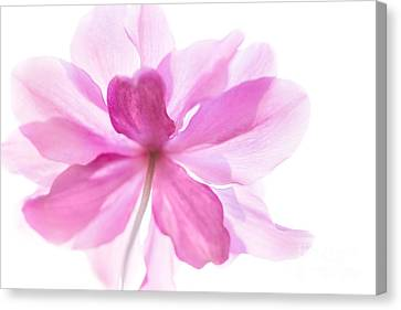 Anemone Flower - Soft And Gentle - Natalie Kinnear Photography Canvas Print