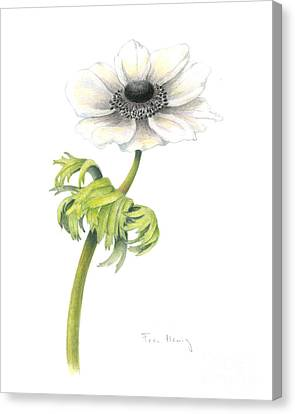 Anemone Canvas Print by Fran Henig
