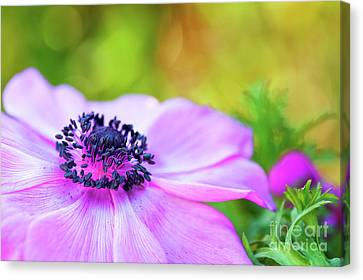 Anther Canvas Print - Anemone Pink by Tim Gainey