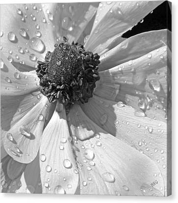Anemone Poppy In Black And White Canvas Print by Ben and Raisa Gertsberg