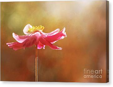 Anemone Warmth Canvas Print