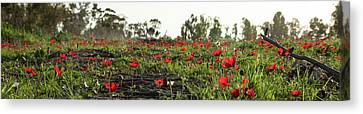 Canvas Print featuring the photograph Anemones Forest Panorama by Yoel Koskas