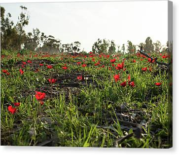 Canvas Print featuring the photograph Anemones Forest by Yoel Koskas