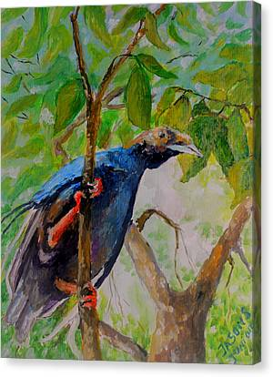 Angel Bird Of Moluccas Canvas Print