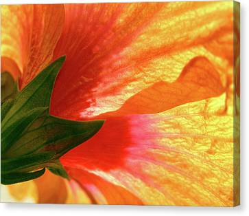 Canvas Print featuring the photograph Angel Brushstrokes  by Marie Hicks