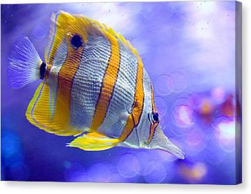 Angel Fish Canvas Print by Carl Jackson