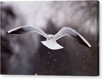 Angelical Canvas Print - Angel - Gull In The Sky by Roeselien Raimond