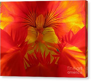 Angel In A Nasturtium Canvas Print