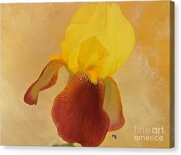 Canvas Print featuring the photograph Angel Iris by Marsha Heiken
