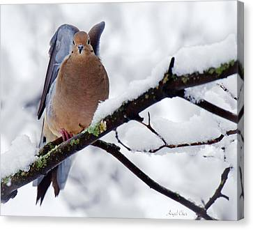 Canvas Print featuring the photograph Angel Mourning Dove by Angel Cher