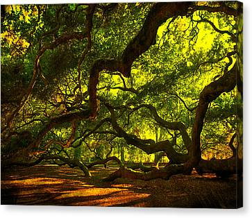 Angel Oak Limbs 2 Canvas Print