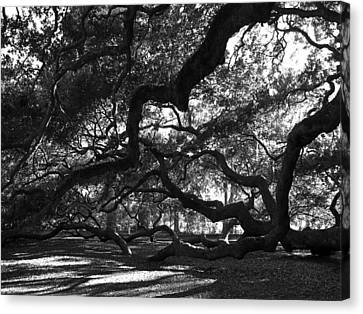 Angel Oak Limbs Bw Canvas Print by Susanne Van Hulst