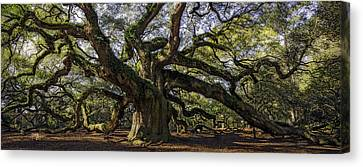 Angel Oak Canvas Print by Michael Donahue
