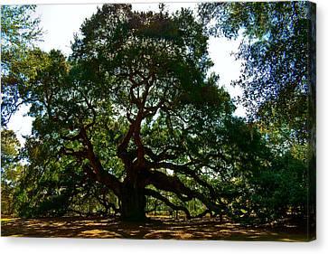 Angel Oak Tree 2004 Canvas Print