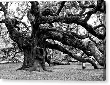 Angel Oak Canvas Print - Angel Oak Tree 2009 Black And White by Louis Dallara