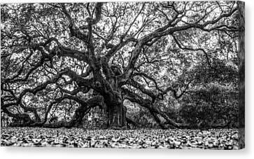 Angel Oak Tree Black And White  Canvas Print by John McGraw