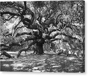 Angel Oak Tree Black And White Canvas Print by Melanie Snipes