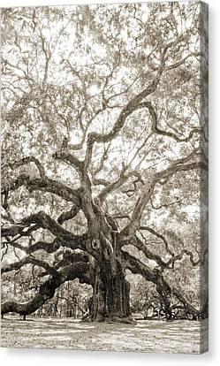 Angel Oak Canvas Print - Angel Oak Tree Charleston Sc by Dustin K Ryan