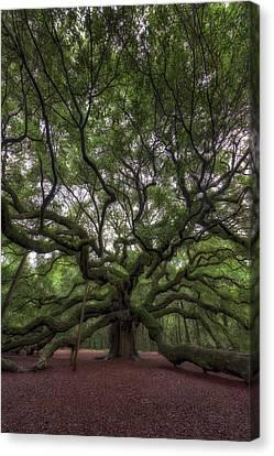 Angel Oak Canvas Print - Angel Oak Tree, Charleston, Sc by Rick Berk