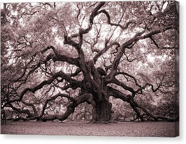 South Carolina Canvas Print - Angel Oak Tree by Dustin K Ryan