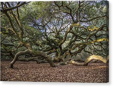 Angel Oak Tree From Behind Canvas Print by John McGraw