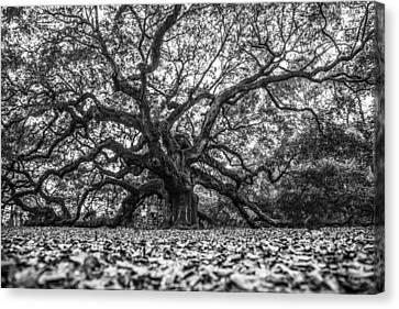 Angel Oak Tree In B And W Canvas Print by John McGraw