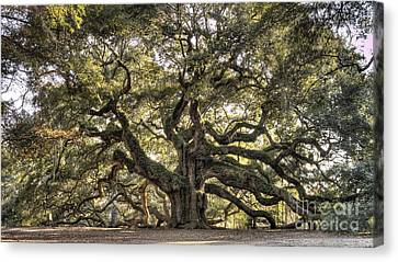 Live Oaks Canvas Print - Angel Oak Tree Live Oak  by Dustin K Ryan