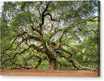 Tree Of Life Canvas Print - Angel Oak Tree Of Life by Dustin K Ryan