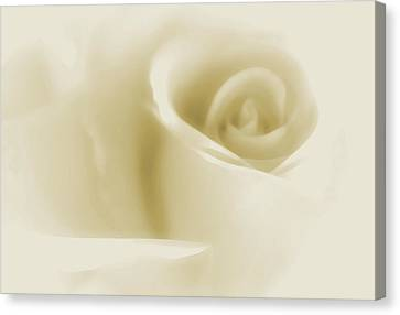 Roses Canvas Print - Angel Serene by The Art Of Marilyn Ridoutt-Greene