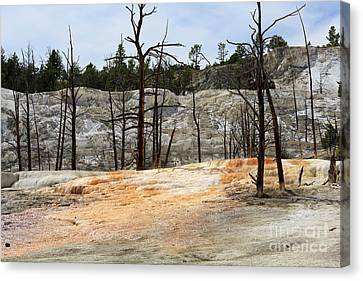 Angel Terrace At Mammoth Hot Springs Yellowstone National Park Canvas Print by Louise Heusinkveld
