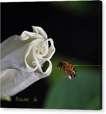 Angel Trumpet Canvas Print