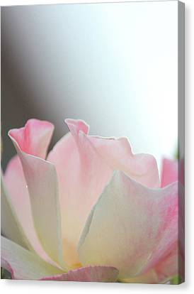 Roses Canvas Print - Angel Whispers by The Art Of Marilyn Ridoutt-Greene