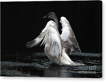Angel Wings 2 Canvas Print by Sharon Talson