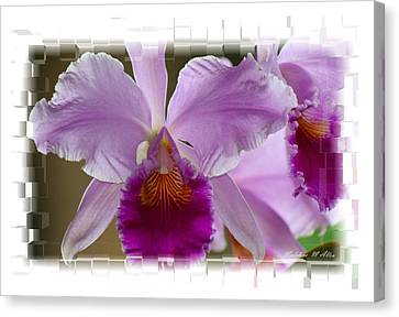 Angel Wings Orchid Canvas Print by Madeline  Allen - SmudgeArt