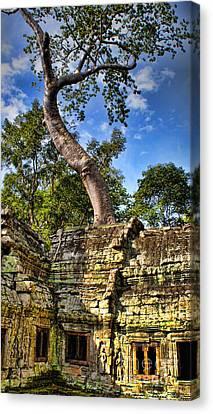 Angkor Wat And Tree Canvas Print by Louise Fahy