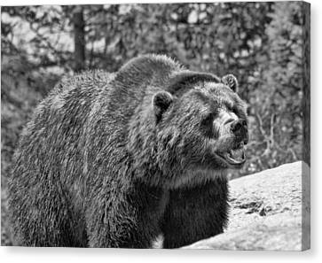 Angry Bear Black And White Canvas Print by Dan Sproul