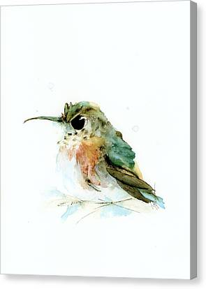 Angry Little Rufous Canvas Print
