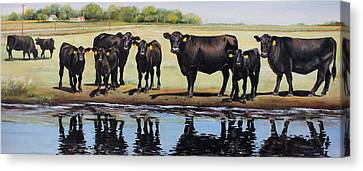 Angus Canvas Print - Angus Reflections by Toni Grote