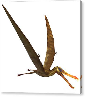 Anhanguera Pterosaur Canvas Print by Corey Ford