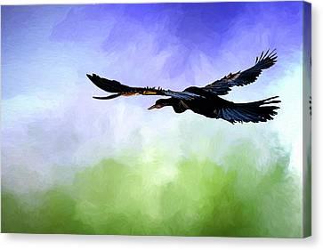 Anhinga In Flight Canvas Print by Cyndy Doty