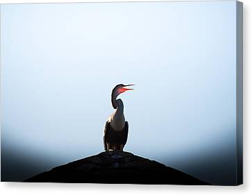 Anhinga Canvas Print by Ivo Kerssemakers
